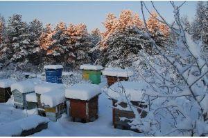 Интересные вопросы зимовки пчел