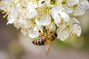 Майский мёд